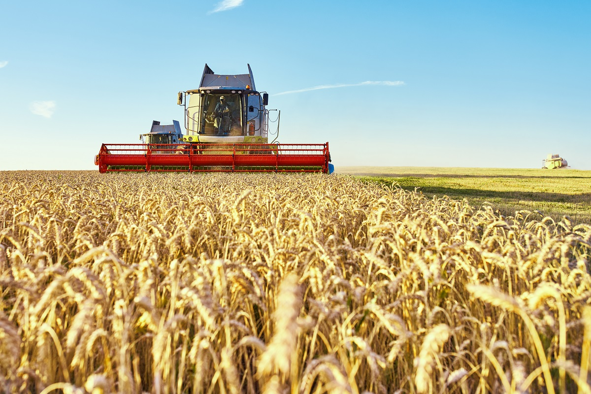 Combine harvester harvests ripe wheat. Ripe ears of gold field on the sunset cloudy orange sky background. . Concept of a rich harvest.