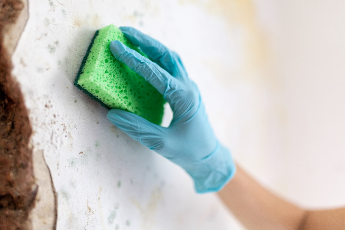 Growth of Molds and Mildew